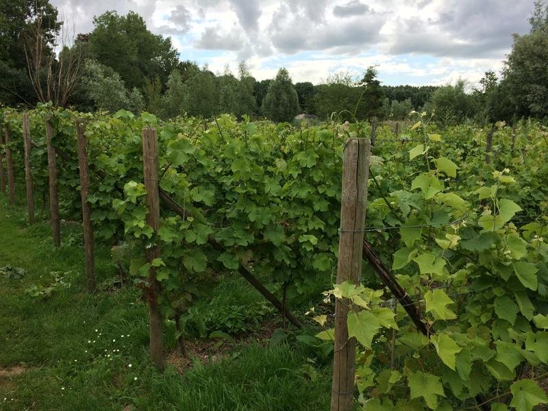 bilderhof wijngaard